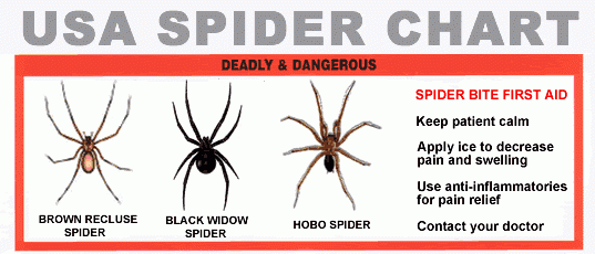 a chart of spiders in portland oregon